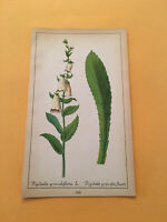 KU) 1878 Botanique Pratique Digitalis Grandiflora Flower Original Colored Print