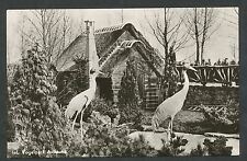 Alphen a/d Rijn  Int. Vogelpark Avifauna Saras-kranen op het strand