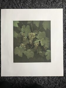 TERENCE MILLINGTON b1942 Limited Edition ETCHING White Grapes ed 150