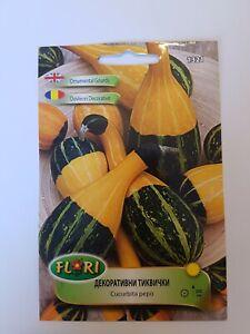 Ornamental Gourd Mini Pumpkin Flower Cucurbita pepo 20 Seeds Decorative