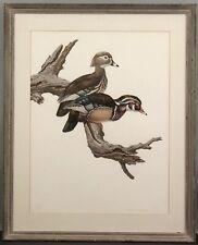 RARE AXEL AMUCHASTEGUI Realist Wildlife WOOD DUCK Waterfowl Watercolor Painting