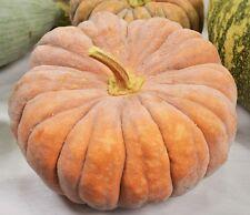 Pumpkin Black Futsu (20seeds)  - Heirloom Organic from Life-Force Seeds