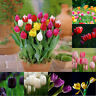 TH_ 50Pcs Tulip Seeds Balcony Garden Outdoor Bonsai Perfume Flower Perennial Pla