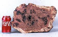 Live Edge Red Mallee Exotic Wood Burl Cap  5 3/4 x 8 x 13    RML1915