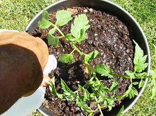 Fruit Trees Growing 40 Books CDROM Gardening Raising Tree Pruning Grafting Seeds