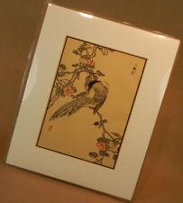 Japan Holzschnitt Vogel Pfefferfresser Mandschurei 1952 Originalgrafik d. Zeit !