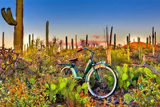 Saguaro National Park by Todd Van Fleet Bike Cycling Bicycle Canvas Giclee 24x36