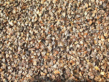 300 Buckwheat seeds Common Edible Cover Crop, Grain, Food Plot Fast Growth Seed