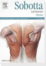 Sobotta Lernkarten Muskeln von Lars Bräuer (2013, Box)