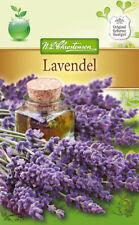 Lavendel Echter - Lavandula angustifolia, ca 140 Samem 4956