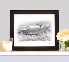 BARBEL Underwater Fish Art Print Drawing Picture MOUNTED Present Gift For Angler