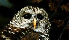 Carl Brenders UP CLOSE-BARRED OWL, ARTIST PROOF A/P #5/76