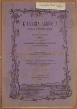 L'UMBRIA AGRICOLA 28 FEBBRAIO 1885 CRISI AGRICOLA UMBRIA AGRICOLTURA VINO WINE