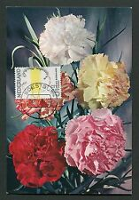 NIEDERLANDE MK 1971 FLORA BLUMEN NELKE MAXIMUMKARTE MAXIMUM CARD MC CM d2908