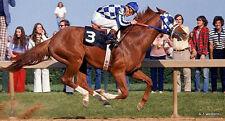 "Secretariat winning race Horse refrigerator magnet  3 x 3 1/2"""
