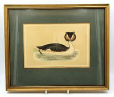 More details for antique 1870's framed great created grebe bird print - wonderful condition