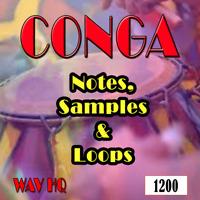 1200 Conga Samples and Loops, Djembe, Cajon, Tribal, Bongo,Create Music, all DAW