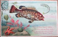 First of April/Premier Avril 1905 Postcard: Starfish & Fish - Color Litho