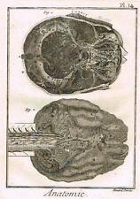 "Diderot's ""Enclyclopedie"" - ANATOMIE - SKULL & SPINE - c1750"