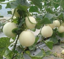 50pcs-White-Muskmelon-Seeds-Sugar-Honey-Melon-Whitebark-Sweet-Melon-Bonsai-Plant