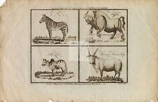 ANTIQUE Natural History Print; Zebu, Zebra, Buffalo, and Horned Sheep #D746