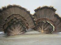 2 Adult Eastern Wild Turkey Tail Fan - Turkey Feathers, hunters, game, decoy.