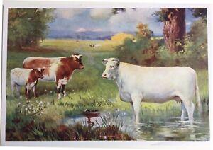 Cattle - Cows - Farm - artist R. Atkinson Fox
