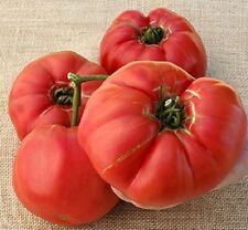 25 Seeds German Giant Tomato Seeds Garden Seed