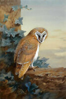 No framed oil painting nice gray birds Owl nighthawk in landscape handpainted