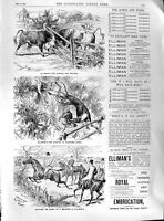 Old 1891 Elliman Slough England Aches Pains Embrocation Horses Bulls Victorian