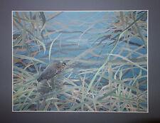 Original Painting Wetland Marsh Rail Bird Gouache on Paper Framed JD 1988