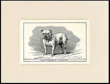 BULLDOG NAMED CHAMPION ANTIQUE 1900 WOOD BLOCK ENGRAVING DOG PRINT READY MOUNTED