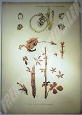 PLANCHE COULEURS ART NOUVEAU 1898 bijoux J. DAMPT ART DECORATIF MODERNE CHAMPIER