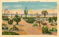 Linen Postcard CA J201 Varieties of Desert Cacti Ocotillo Mescal Cholla Prickly