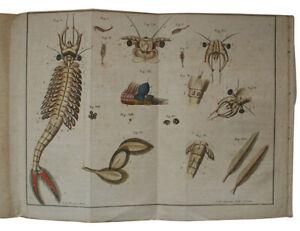 1757 SCHAFFER Natural History INSECTS Botany ENTOMOLOGY Zoology