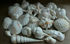 35 Edible Sugar Icing Sea Shells Beach Themed Wedding Toppers Cake Decorations