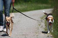 BIOTHANE Zwillingsleine BALDOLINO Doppelleine Handschlaufe gepolstert bis 15kg