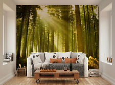 ohpopsi Sunlight Shining Through Trees In A Forest Wall Mural Wall Art