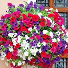 2000+Dwarf Petunia Mix Flower Seeds Garden/Containers Hanging Baskets Window Box