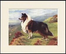 ROUGH COLLIE LOVELY LITTLE DOG ART PRINT MOUNTED READY TO FRAME