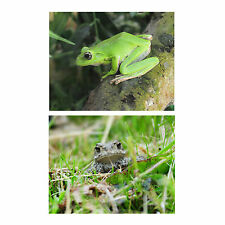 2 Animal POSTCARDS Frog Toad Steve Greaves Print Wildlife Amphibian Card Nature