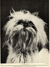 1930s Antique Lhasa Apso Dog Print Madame Ailine Lhasa Apso Photo 3698-G