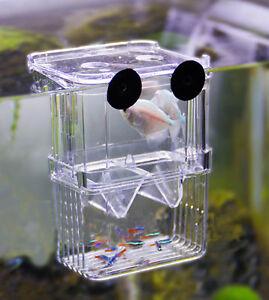 Floating Breeding Box Hatchery Nursery for Live Fry Babies Pregnant Fish 2 sizes