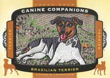 2018 Upper Deck Goodwin Champions Canine Companions #Cc108 Brazilian Terrier