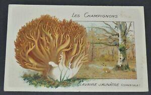 CHROMO 1920-1930 ECOLE BON POINT CHAMPIGNON MYCOLOGIE CLAVAIRE JAUNATRE PILZ
