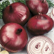 Seeds Onion Red Baron Giant Vegetable Organic Heirloom Russian Ukraine