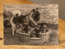 More details for rare keeshond original dog photograph by henri dimont paris 1950 nr 1