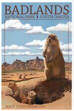 Badlands National Park South Dakota, Prairie Dog, Sd, Animal - Modern Postcard