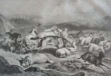 Wolves attacking a flock of sheep.....wood engraving...1860s