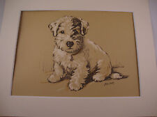 More details for 1936 lucy dawson vintage colour print sealyham terrier pup matted ready to frame